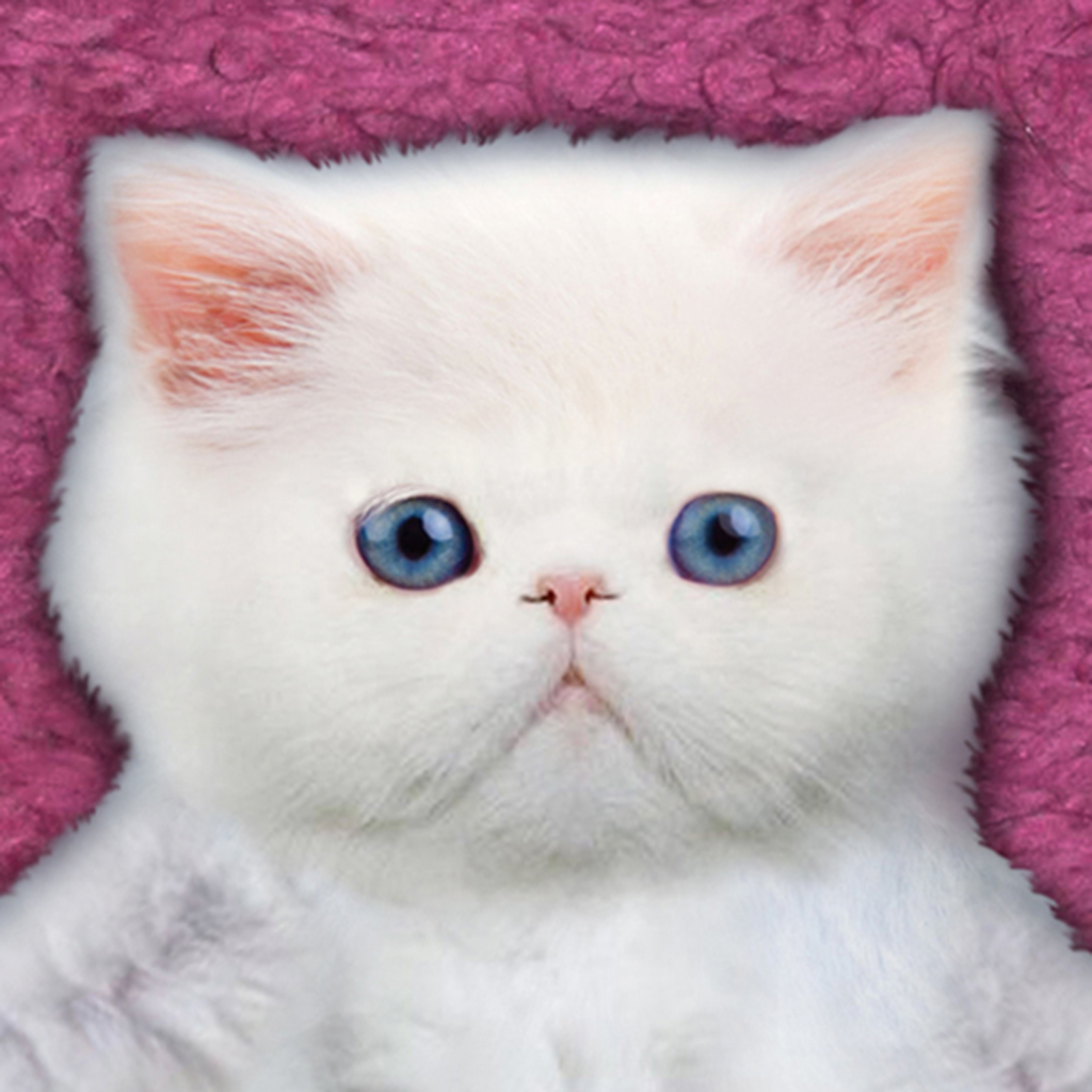 Kitten Calculator HD app icon