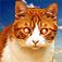 猫バイブ - リモートコミュニケーター
